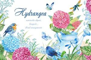 hydrangea watercolor clipart