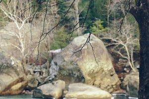 Cumberland River Landscape