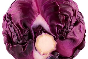 Isolated beautiful red savoy cabbage