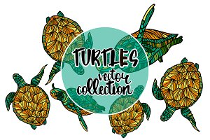 Turtles vector collection