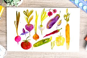 Watercolor vegetables. Sketch