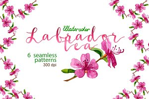 Watercolor Labrador tea patterns