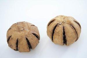 Dry brazilian walnut Bertholletia
