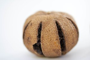 Dry brazil nut, Bertholletia