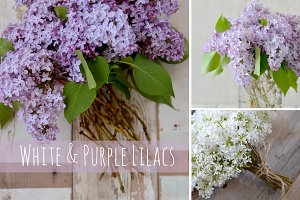 White and Purple Lilacs