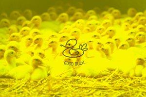 Logotype «Good Duck»