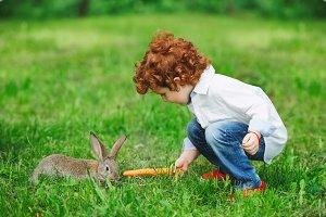 boy feeding rabbit with carrot in park