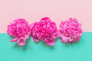 three buds of peonies