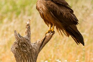 Beautiful eagle on a branch