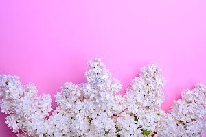 bouquet of white blossoming lilacs