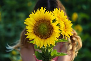 Young beautiful woman stands in a field of sunflowers,  closed face