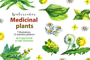 Watercolor medicinal plants set