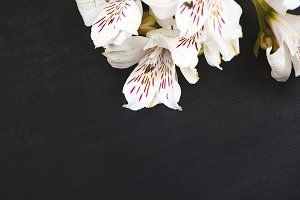 Flowers on black wood background. Lilies. Horizontal shoot.
