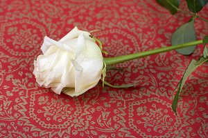 Pink on decorated red paper. Flowers.