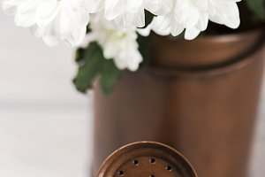 Flowers in a watering can on wooden table. Daisy flower. Vertical shoot.