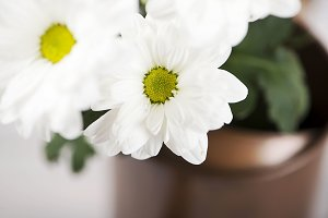 Close-up of flowers in a watering can on wooden table. Daisy flower.