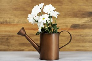 Flowers in a watering can on wooden table. Daisy flower.