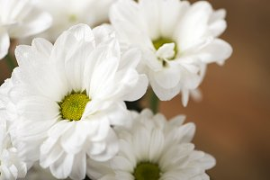 Close-up of flowers on wooden background. Daisy flower.