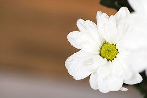 Close-up of a flower on wooden background. Daisy flower. Decor.