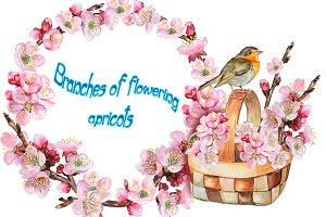Set of flowering apricots