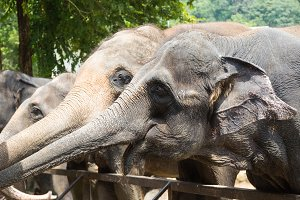 Wild elephant in animal park
