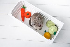 grey Burmese kitten sitting in a wooden box with crocheted toys. The view from the top.