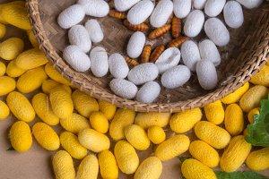Silkworm cocoons.
