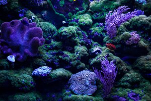 Colourful coral reefs and on the bottom.
