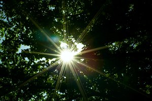 Sun through the forest.