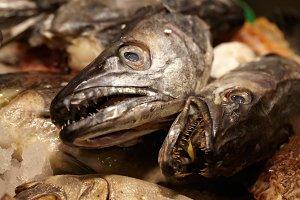 Sea food. Fish heads.