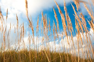 Grass and sky.
