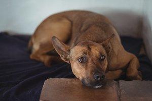 Dog resting on dog bed