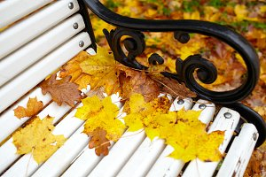 Yellow maple leaf on the bench.