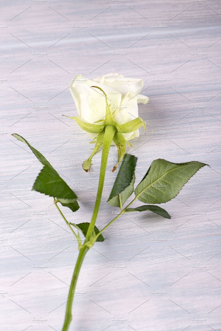 White Rose On Wooden Table Flower Vertical Shoot Nature Photos