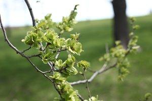 Close Up Tree Bud
