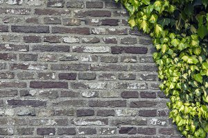Old red brick wall covered by ivy
