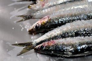 Fresh sardines with saltz