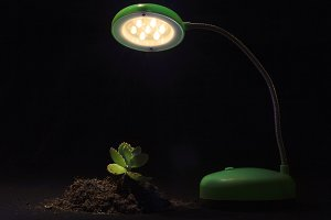 Young sprout table lamp black