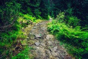little green path