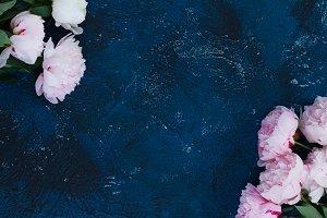 Fresh peonies on blue