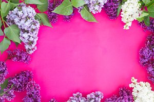 Lilac on pink