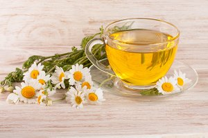 Herbal tea with fresh chamomile flowers on a light wooden background