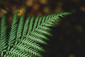Green Fern Closeup