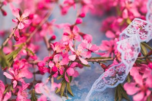Spring flowering branches, pink flowers on a blue background