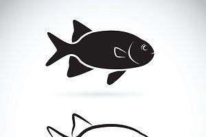 Vector of two fish. Aquatic animals.