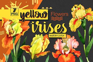 Yellow irises watercolor PNG clipart