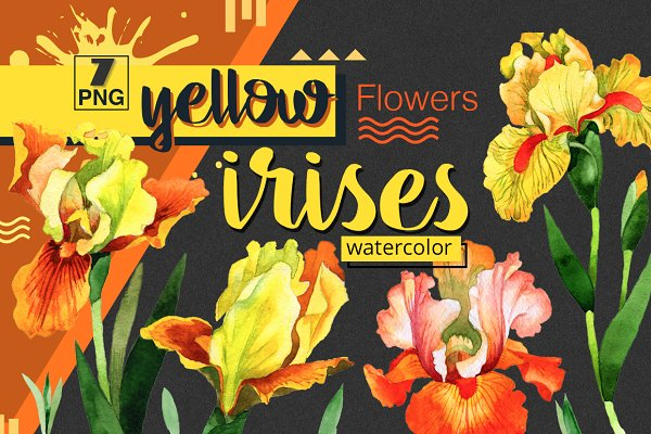 Yellow irises watercolor PNG clipar…