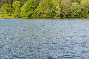 Cabarceno lake