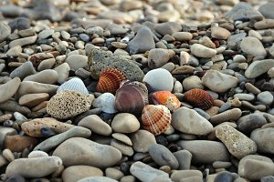 Seashells Rocky Beach