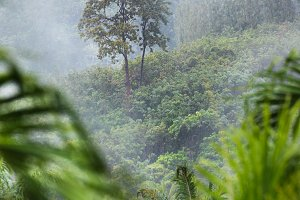 Tropic forest in rain and mist fog